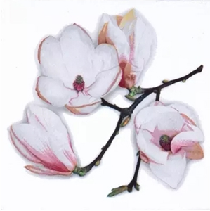 White Magnolia Decorative Napkins - 20 ct